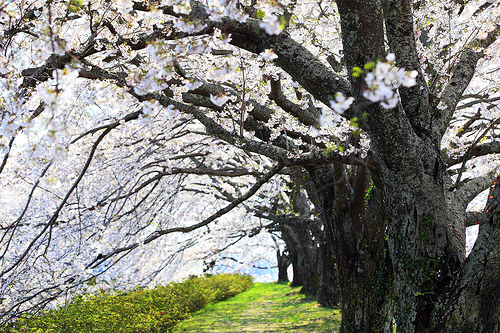 【お気に入り】花は咲く アニメスターバージョン:アニメの力とNHKの本気