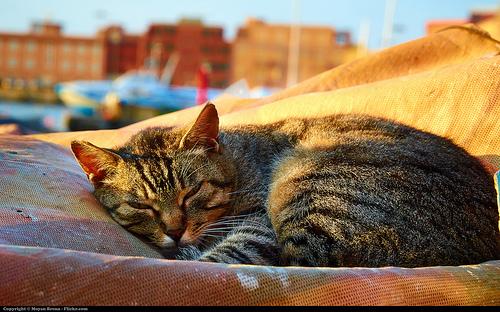 【いろいろ】2時間睡眠でオッケー?!:科学が進歩すると…怖い気もしますが