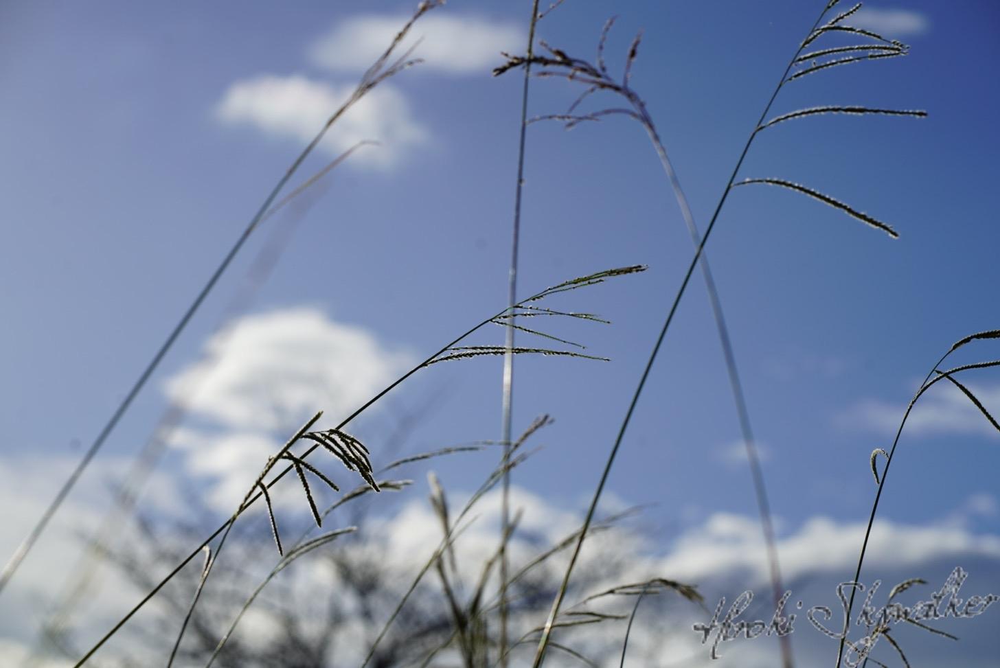【写真】秋の公園:85ミリレンズで切り取ってみる