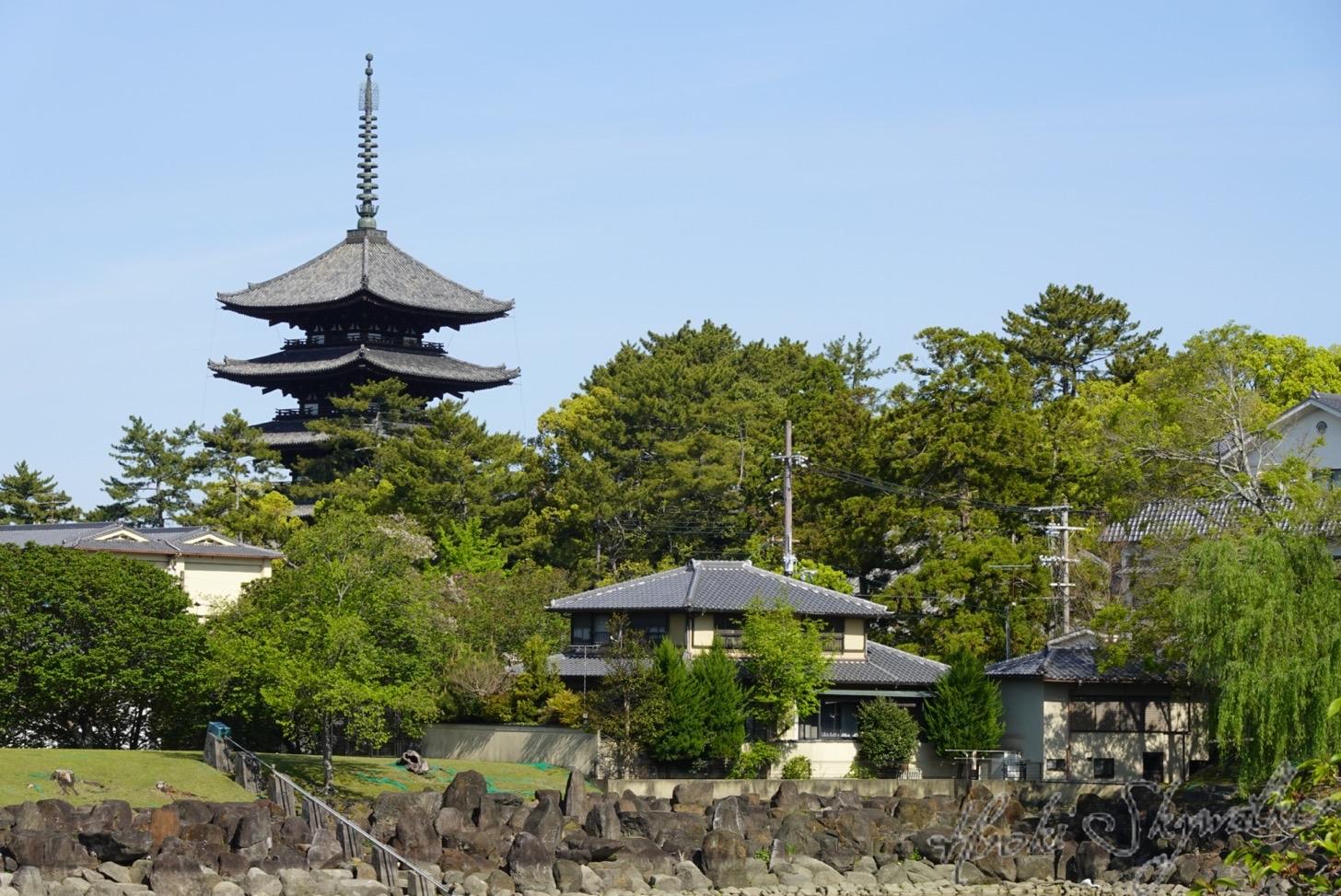 【国内】久々の奈良:奈良ならではのお食事!大和庵