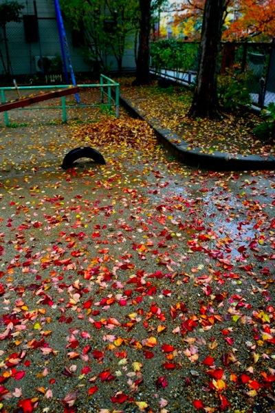 雨の京都、根性無し